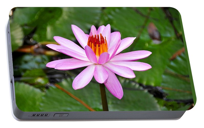Flower Portable Battery Charger featuring the photograph Perfectly Pink by David Lee Thompson