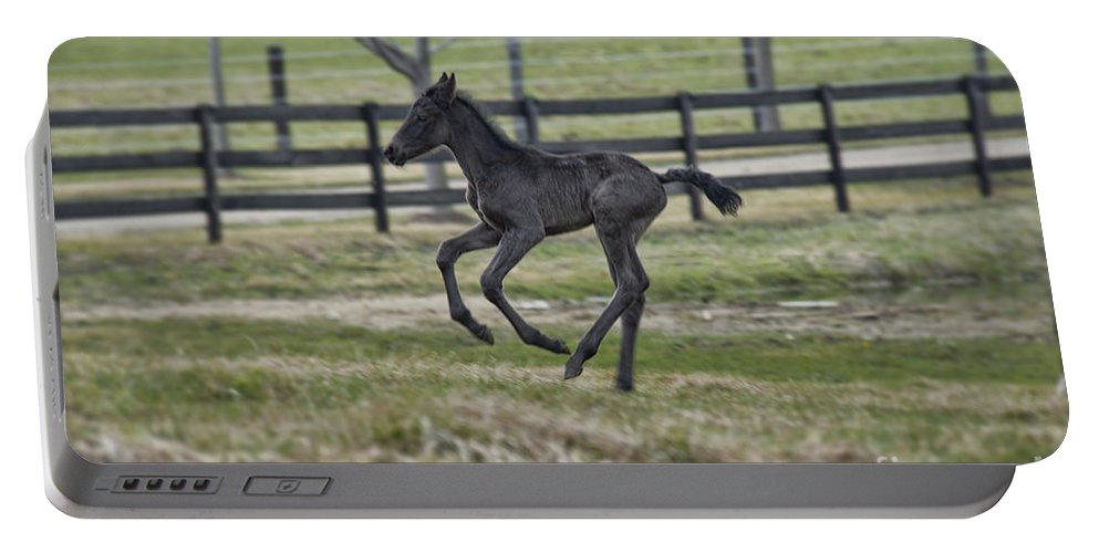 Running Colt Portable Battery Charger featuring the photograph Perry's Colt Running by David Arment
