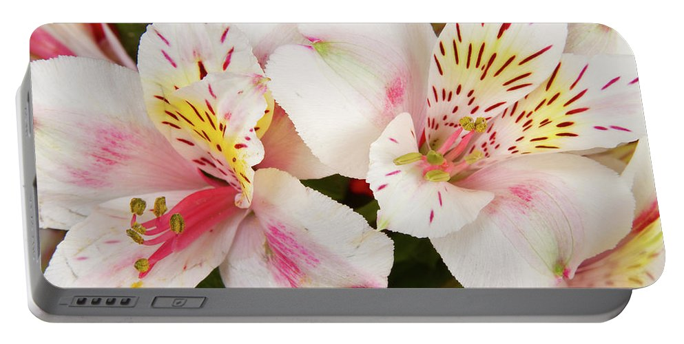 Peruvian Lilies Portable Battery Charger featuring the photograph Peruvian Lilies Flowers White And Pink Color Print by James BO Insogna