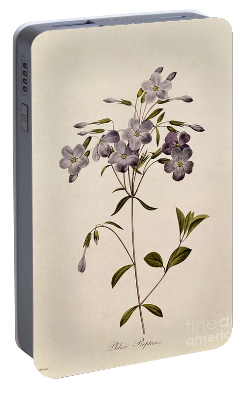 Phlox Portable Battery Charger featuring the drawing Phlox Reptans by Pierre Joseph Redoute