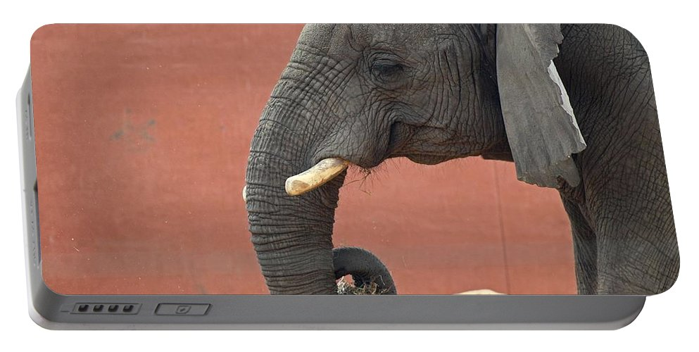 Elephant Portable Battery Charger featuring the photograph Pick The Lock On Your Heart by Michiale Schneider
