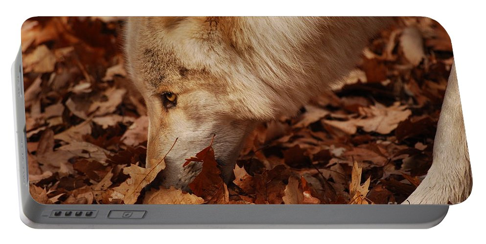 Wolf Portable Battery Charger featuring the photograph Picking Up The Scent by Lori Tambakis