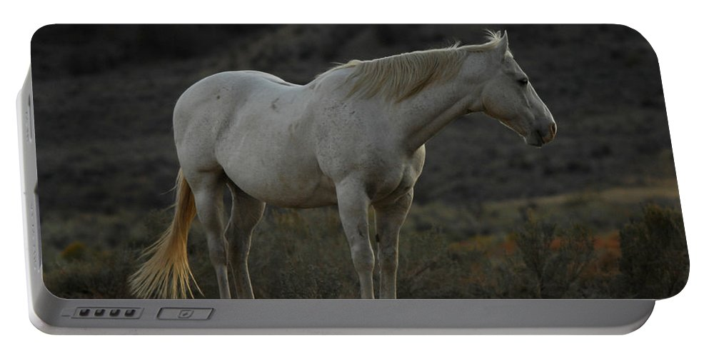 Horse Portable Battery Charger featuring the photograph Pierre by Donna Blackhall