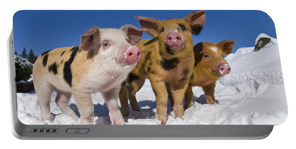 Piglet Portable Battery Charger featuring the photograph Piglets In Snow by Jean-Louis Klein & Marie-Luce Hubert