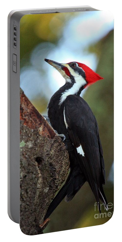 Woodpecker Portable Battery Charger featuring the photograph Pilated Woodpecker by Randy Matthews