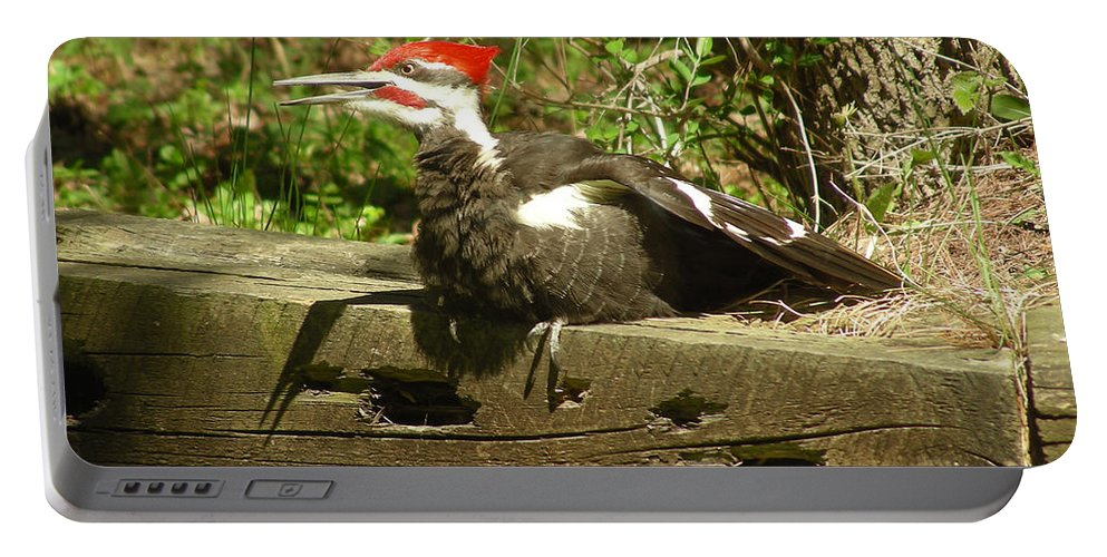 Faunagraphs Portable Battery Charger featuring the photograph Pileated Woodpecker1 by Torie Tiffany