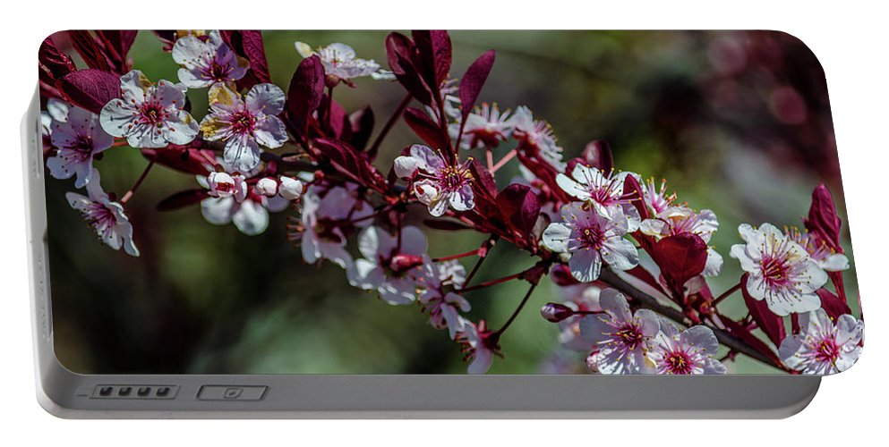 Maine Portable Battery Charger featuring the photograph Pin Cherry Blossoms by Dan Jordan