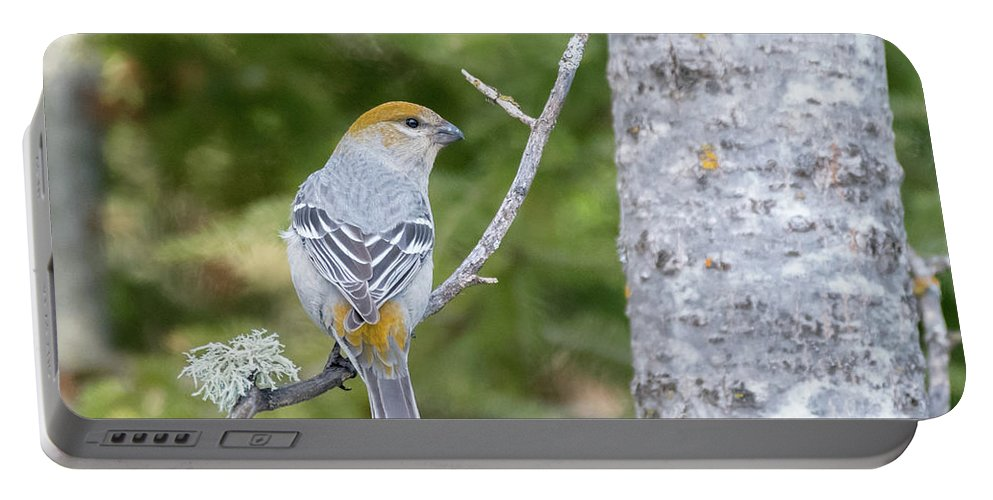 Mike Timmons Portable Battery Charger featuring the photograph Pine Grosbeak by Mike Timmons