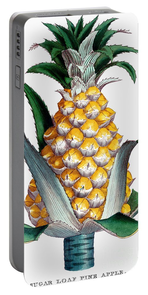 1789 Portable Battery Charger featuring the photograph Pineapple, 1789 by Granger