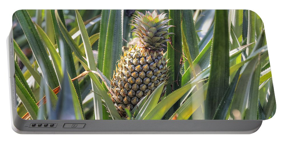 Pineapple Portable Battery Charger featuring the photograph pineapple plantation in Kerala - India by Joana Kruse