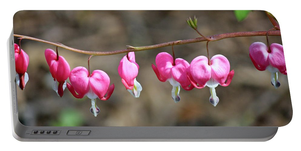 Lamprocapnos Spectabilis Portable Battery Charger featuring the photograph Pink Bleeding Hearts 2 by Teresa Mucha