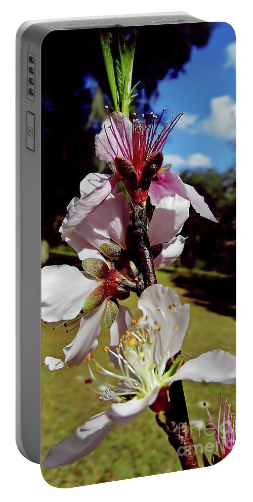 Peach Blossom Portable Battery Charger featuring the photograph Pink Blossoms by D Hackett