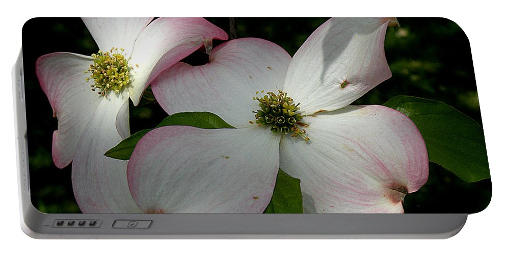 Tranquility Portable Battery Charger featuring the photograph Pink Dogwood by Janis Kirstein