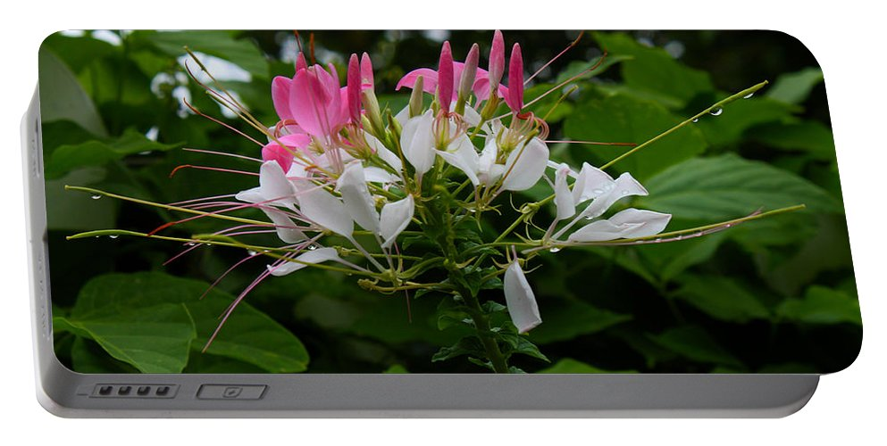 Flower Portable Battery Charger featuring the photograph Pink Explosion Of Spring by Susan Vineyard
