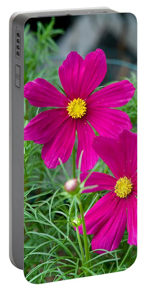Pink Portable Battery Charger featuring the photograph Pink Flower by Michael Bessler