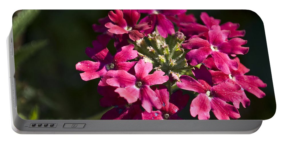 Nature Portable Battery Charger featuring the photograph Pink Flower by Svetlana Sewell