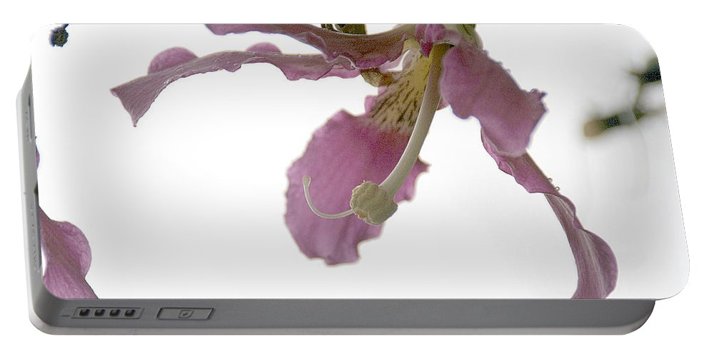 Flower Portable Battery Charger featuring the photograph Pink Flower by Vladi Alon