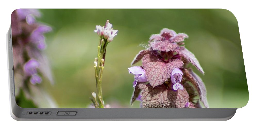 Pink Flower Portable Battery Charger featuring the photograph Pink by Keith Bowen