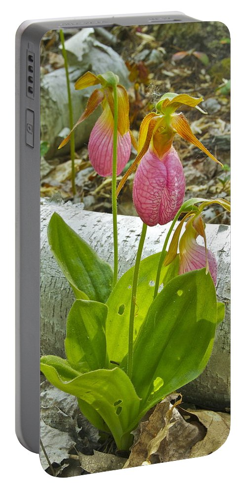 Wildflower Portable Battery Charger featuring the photograph Pink Lady Slipper by Michael Peychich