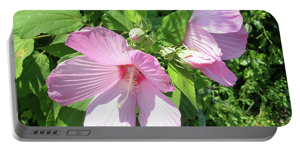Hibiscus Portable Battery Charger featuring the photograph Pink Marsh Mallow Wildflower by Mother Nature