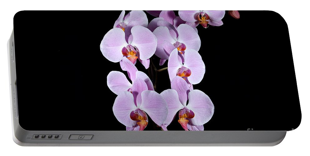 Beauty Portable Battery Charger featuring the photograph Pink Orchid Iv by Ralf Broskvar
