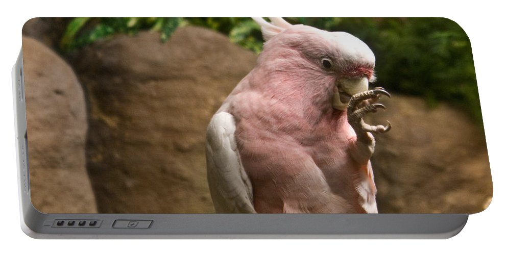 Pink Portable Battery Charger featuring the photograph Pink Parrot Nibbling Foot 2 by Douglas Barnett