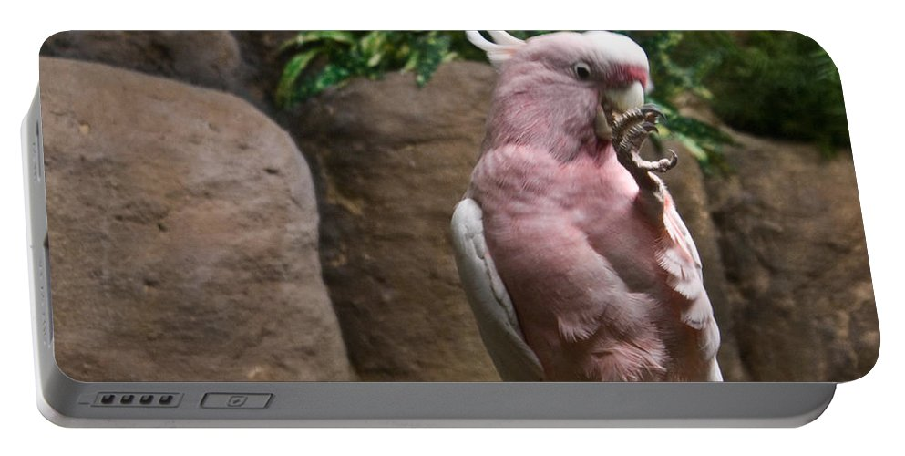 Pink Portable Battery Charger featuring the photograph Pink Parrot Nibbling Foot by Douglas Barnett