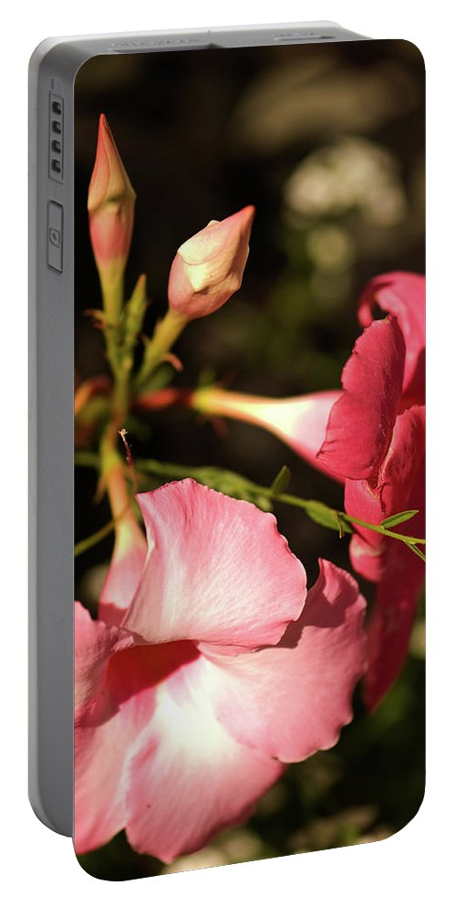 Flower Portable Battery Charger featuring the photograph Pink by Paul Mangold