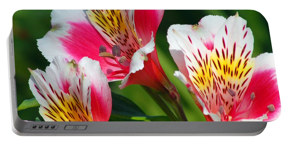 Peruvian Portable Battery Charger featuring the photograph Pink Peruvian Lily 2 by Amy Fose