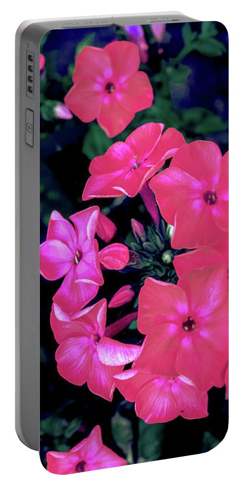 Pink Portable Battery Charger featuring the photograph Pink Phlox by Raechel Genco