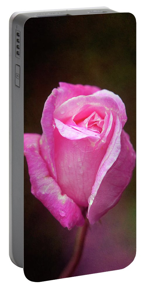 Pink Portable Battery Charger featuring the photograph Pink Rose by Amy Jackson