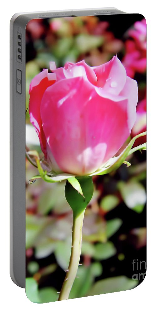 Roses Portable Battery Charger featuring the photograph Pink - Rose Bud - Beauty by D Hackett