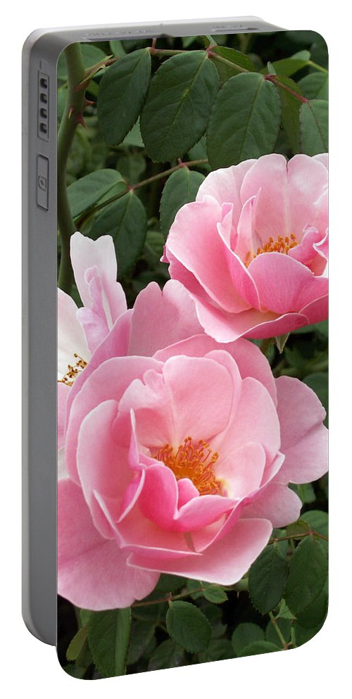 Roses Portable Battery Charger featuring the photograph Pink Roses 1 by Amy Fose