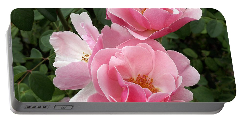 Pink Roses Portable Battery Charger featuring the photograph Pink Roses 2 by Amy Fose