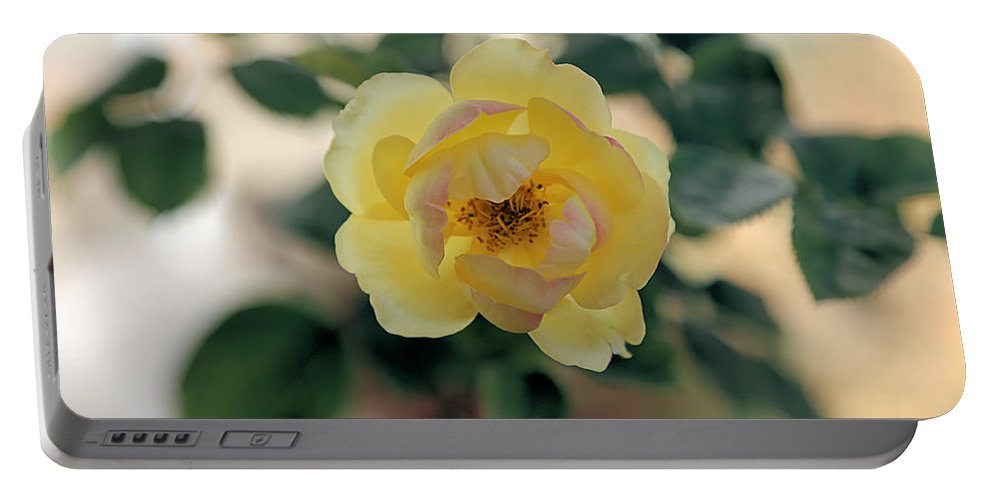 Rose Portable Battery Charger featuring the photograph Pink Tipped Yellow Rose by Theresa Campbell