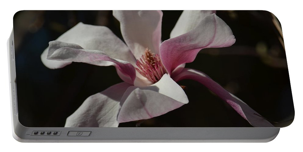 Pink Tulip Magnolia Portable Battery Charger featuring the photograph Pink Tulip Magnolia by Maria Urso