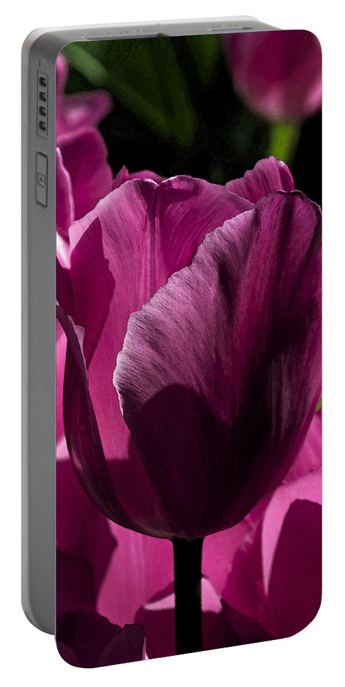 Summer Portable Battery Charger featuring the photograph Pink Tulip Watercolor by Cathy Mahnke