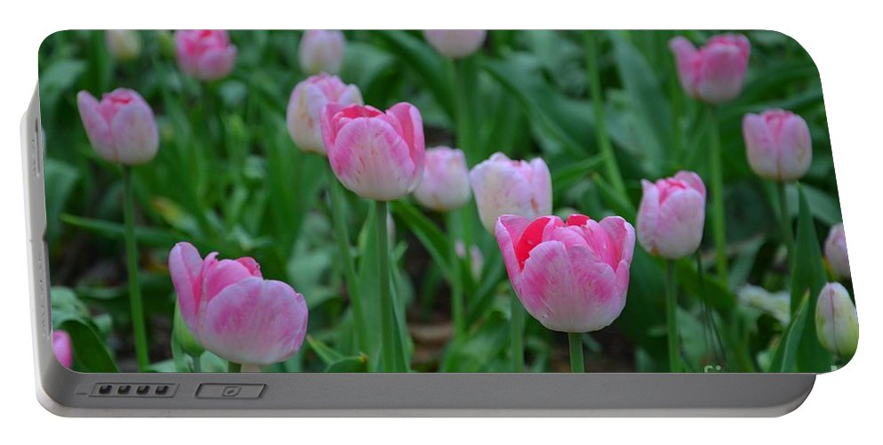 Tulips Portable Battery Charger featuring the photograph Pink Tulips by Deanna Cagle