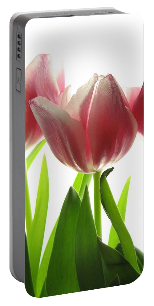 Tulip Portable Battery Charger featuring the photograph Pink Tulips by Jane Linders