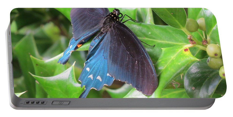 Swallowtail Butterfly Portable Battery Charger featuring the photograph Pipevine Swallowtail by Charles Green