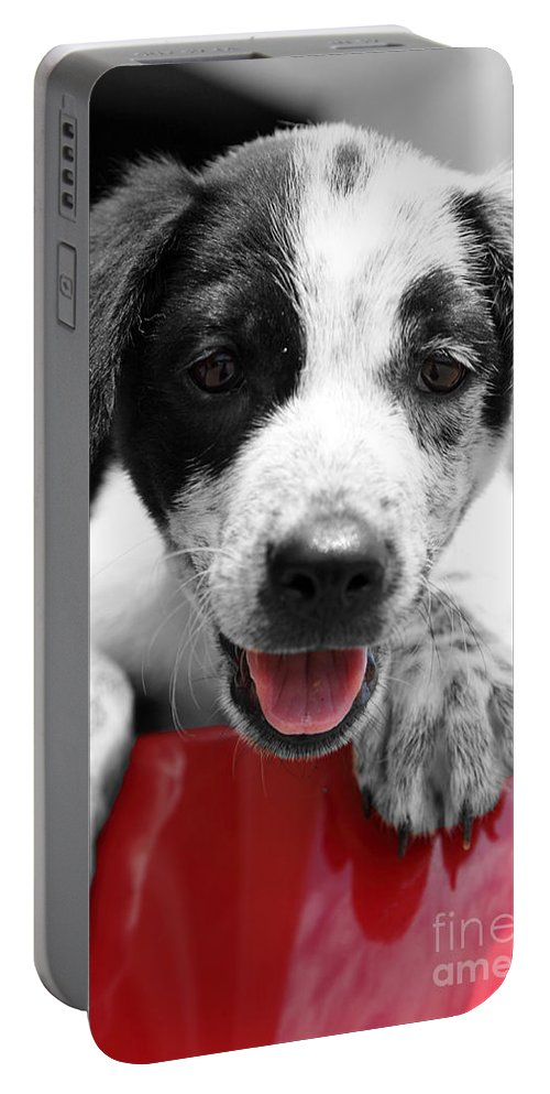 Puppy Portable Battery Charger featuring the photograph Playing by Amanda Barcon