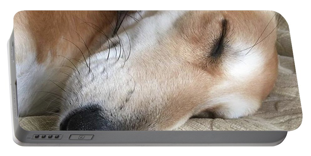 Persiangreyhound Portable Battery Charger featuring the photograph Please Be Quiet. Saluki by John Edwards