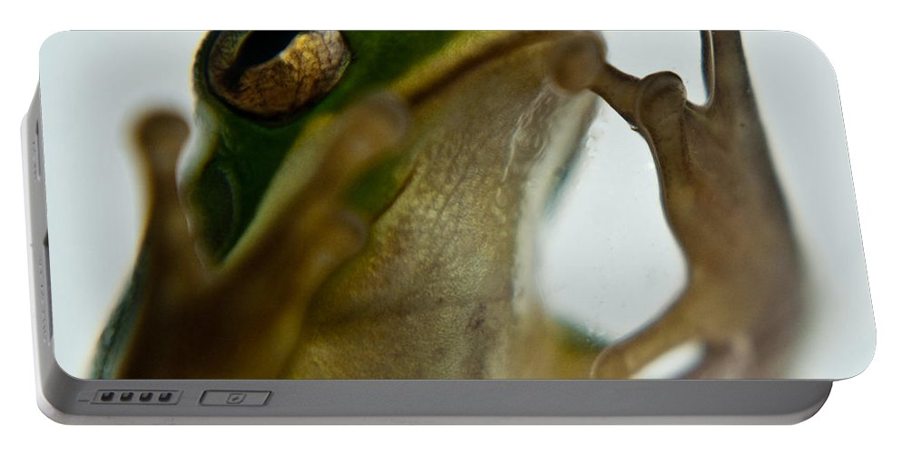 Frog Portable Battery Charger featuring the photograph Please Not In A Frogs Eye by Douglas Barnett