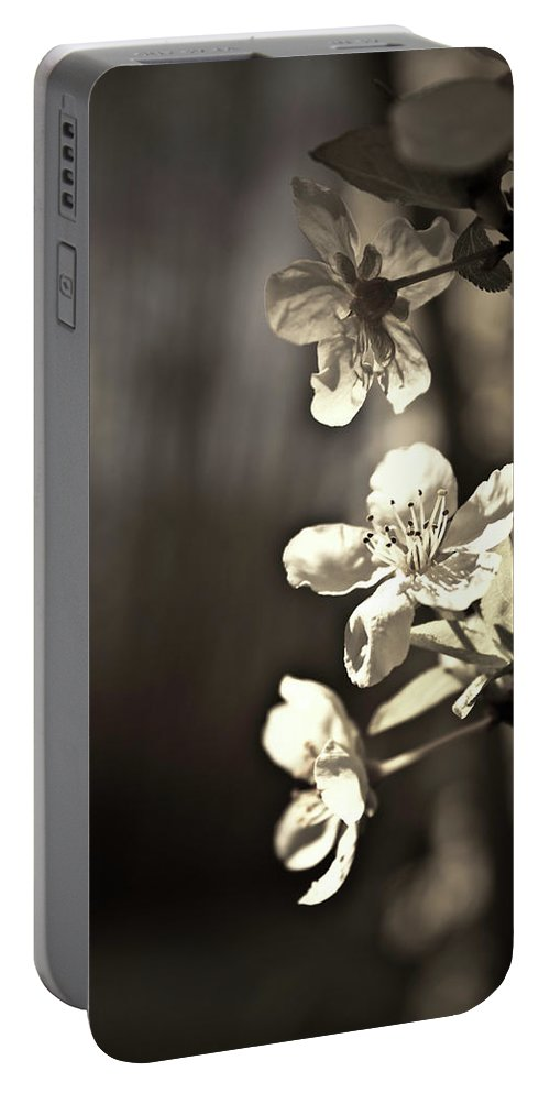 Plum Blossoms Portable Battery Charger featuring the photograph Plum Blossoms by Danielle Silveira