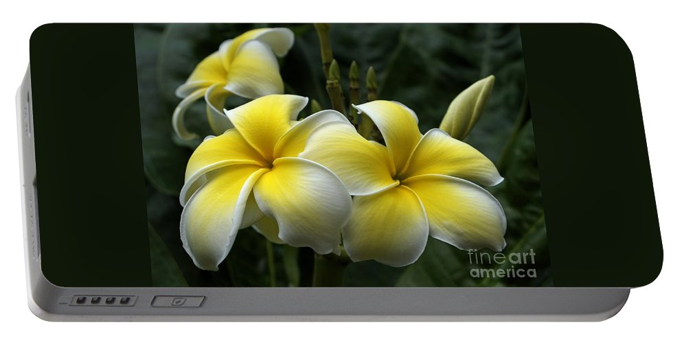 Plumeria Portable Battery Charger featuring the photograph Plumeria by Ann Horn