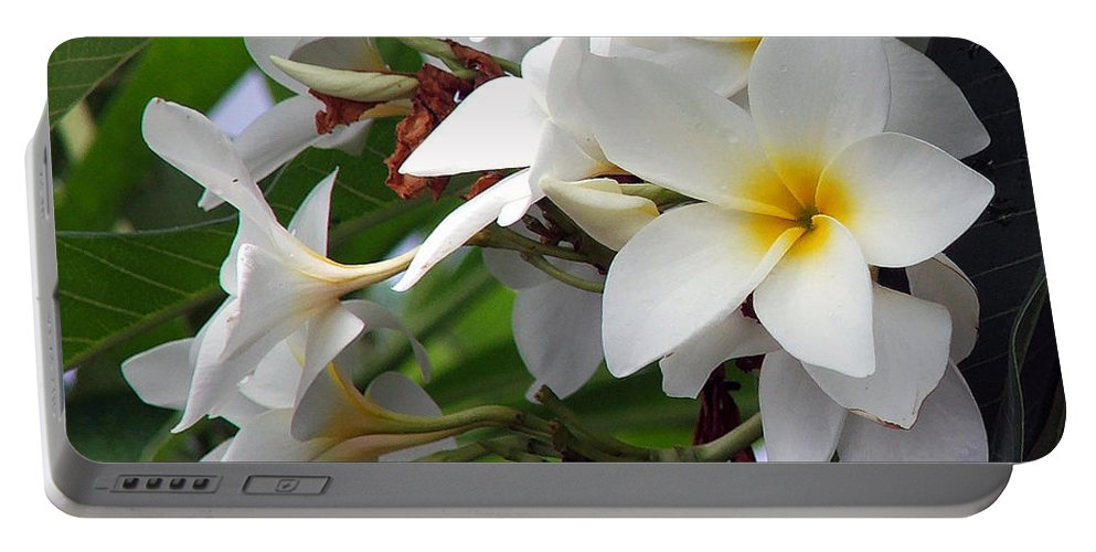 Flower Portable Battery Charger featuring the photograph Plumeria by Robert Meanor