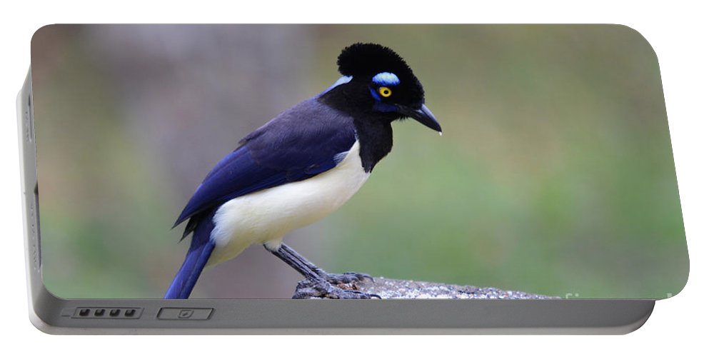 Pantanal Portable Battery Charger featuring the photograph Plush Crested Jay by Ralf Broskvar