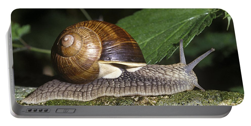 Burgundy Snail Portable Battery Charger featuring the photograph Pneumostome Of A Burgundy Snail by Jean-Louis Klein & Marie-Luce Hubert