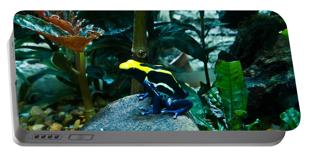 Poison Portable Battery Charger featuring the photograph Poison Dart Frog Poised For Leap by Douglas Barnett