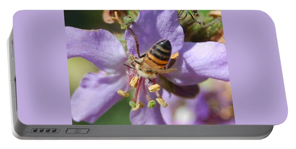 Bees Portable Battery Charger featuring the photograph Pollinating 4 by Amy Fose